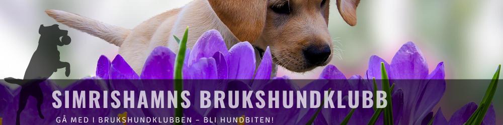 cropped-krokushund.png